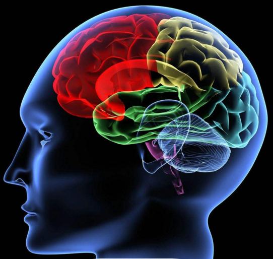 研究:人脑拥有对抗机制应对衰老的不利影响