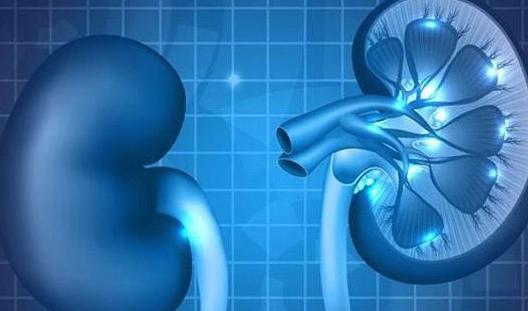 得了慢性肾炎不治会有什么后果?_拓诊卫生资讯