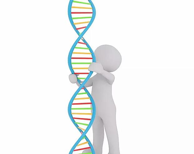 研究发现:父亲影响孩子身高 母亲决定孩子胖瘦_拓诊卫生资讯