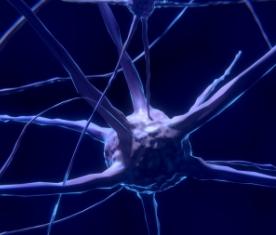 最新研究:大脑非神经元细胞可转化为功能性神经元