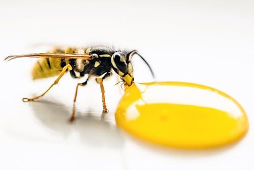 蜂蜜水送药损药效