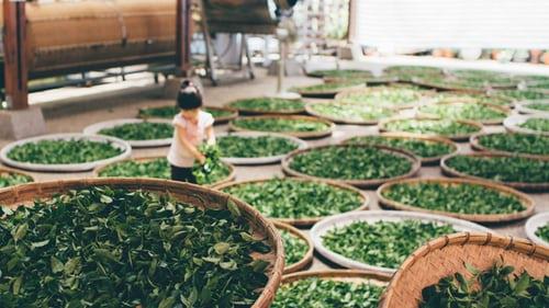 绿茶红茶 你该选啥