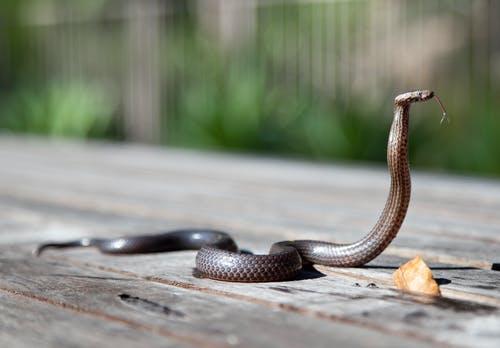 """被""""毒蛇""""咬伤如何科学自救_拓诊卫生资讯"""