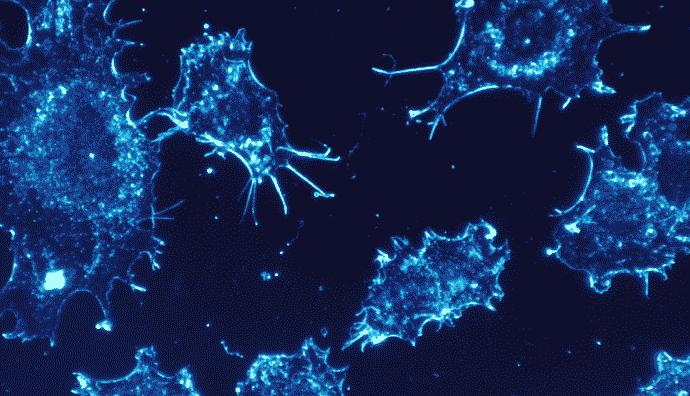 """新型药物能""""欺骗""""癌细胞,让人体免疫系统摧毁癌症"""