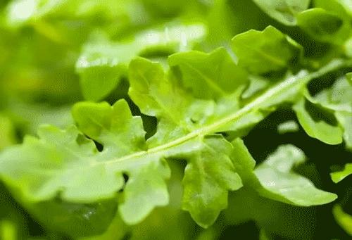 春天不能错过的5种野菜,比吃补药强百倍!