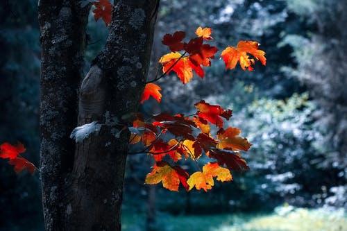 要想冬天不生病,立秋之后,这个器官千万要护好!