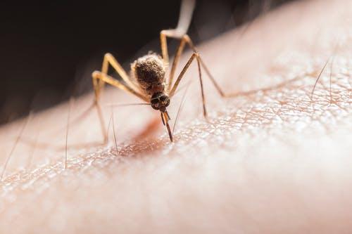 蚊虫叮咬,最止痒的办法竟然这么简单?!